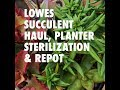 LOWES SUCCULENT AND PLANTER HAUL + HOW TO STERILIZE PLANTERS