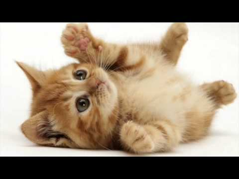 Various Cat sounds Guaranteed to Make Your Cat go Crazy! 2 H