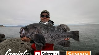 JETTY Black Rock Fish: HOW TO