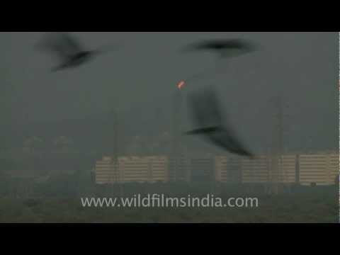 Oil refinery flame in Mumbai