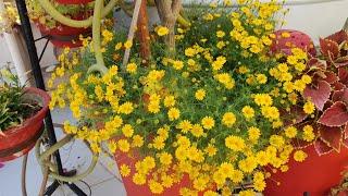 best-summer-hanging-basket-plants-fun-gardening