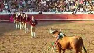 Download Video Bullfight MP3 3GP MP4