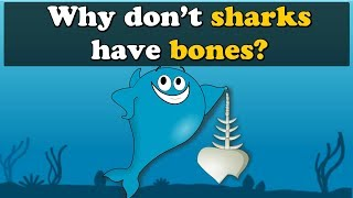 Why don't Sharks have Bones? | #aumsum