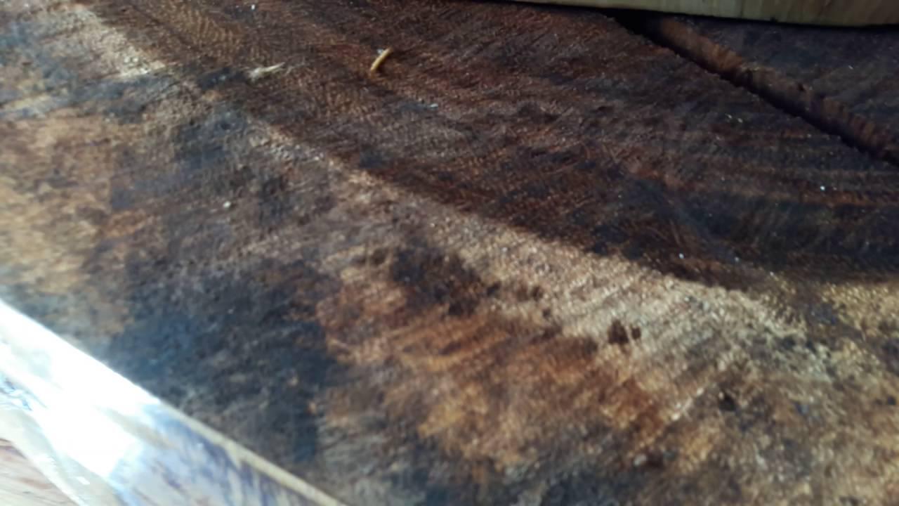Como tratar la madera para la polilla youtube - Como tratar la madera ...