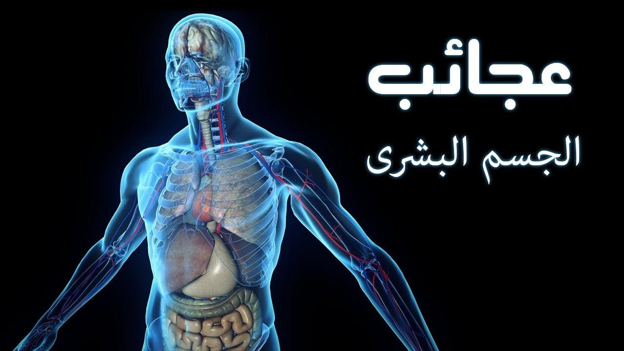 نتيجة بحث الصور عن عجائب جسم الانسان ، اغرب المعلومات عن الجسم البشرى
