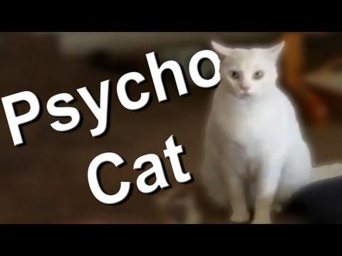 PSYCHO CAT - PAROLE DE CHAT