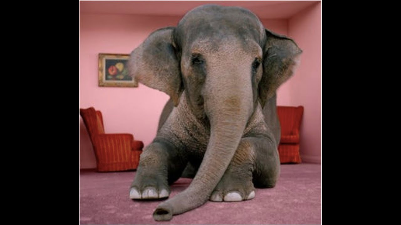 Faith The Elephant In The Room Youtube
