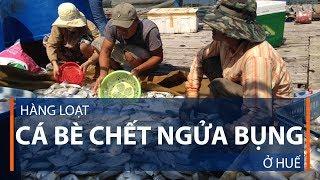 Hàng loạt cá bè chết ngửa bụng ở Huế | VTC1