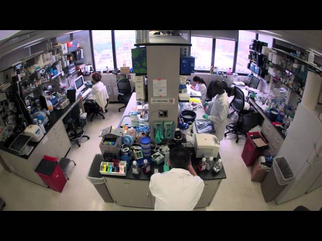 The Mount Sinai Department of Microbiology