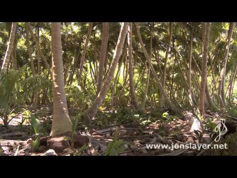 Diego Garcia Coconut Chaos