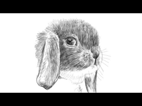 how to draw a rabbit face youtube