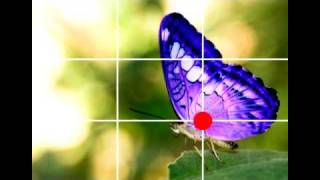 Basic Photography: Rule of Thirds