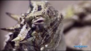 Животные мира Самые способные Секретное оружие Место обитания Очень странные Миг охоты Самые мерзкие