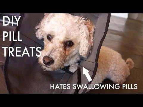 DIY Pill Pocket Treats For Dogs