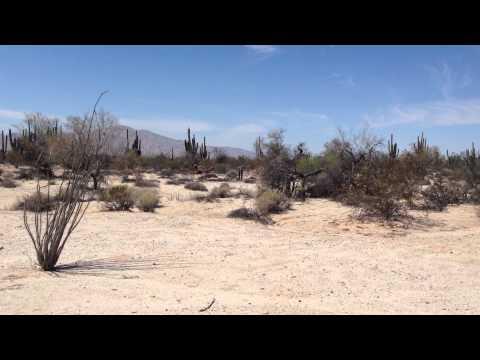 Valley Of Giants (Sahuaros) - San Felipe Things To Do