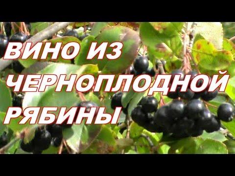 Как поставить вино из черноплодной рябины в домашних условиях