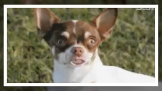 Смешные собаки Funny dogs