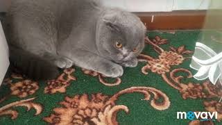 Злой кот. angry cat.