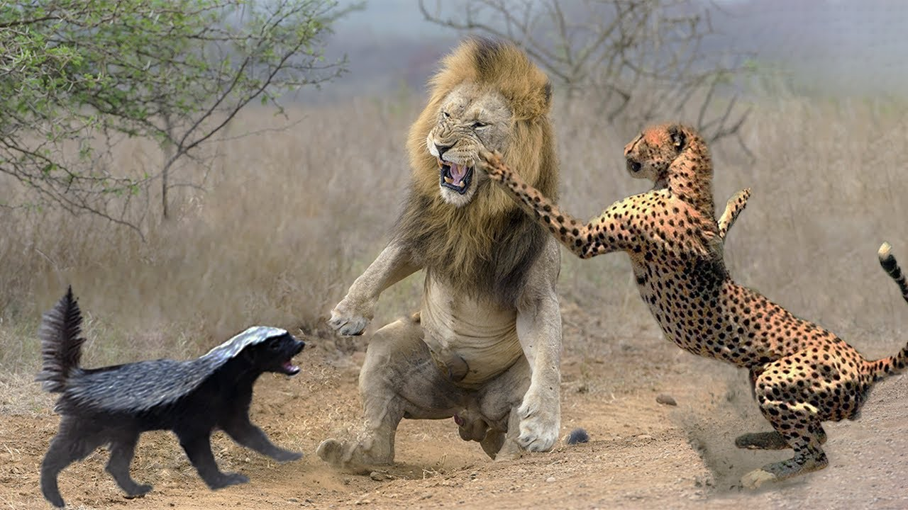 10 Most Aggressive Animals in the World