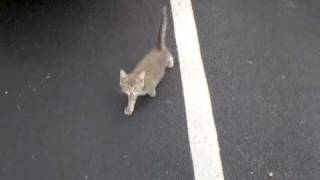3 abandoned kittens in parking lot