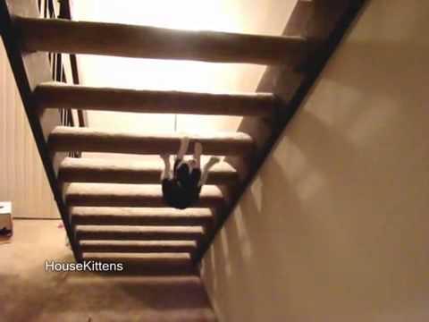 子猫は階段を裏側から登る?(動画)