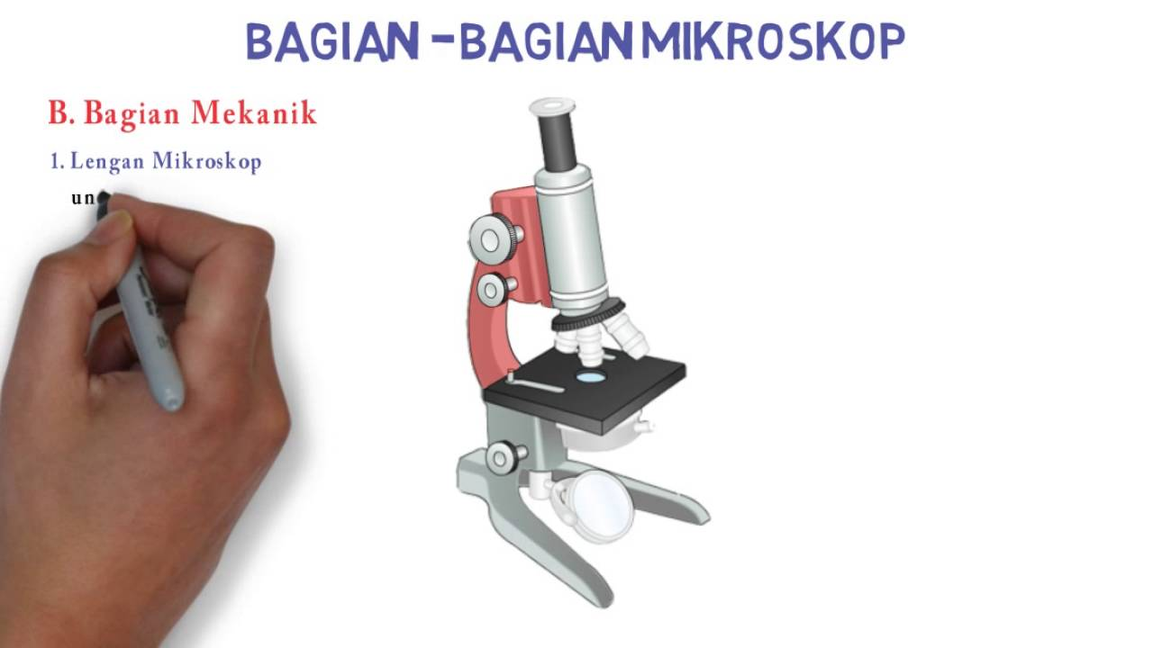 Laporan praktikum pengenalan mikroskop cahaya laporan praktikum
