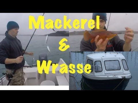 Sea Fishing Cornwall - MACKEREL, WRASSE AND SARDINES!