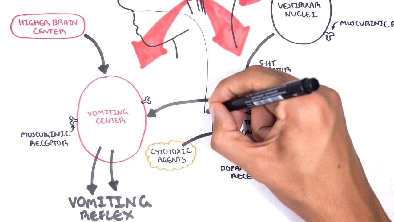 Physiology of Vomiting - Vomiting reflex (NEW) - YouTube