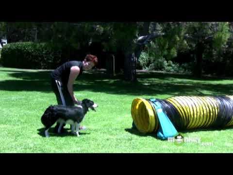 Dog Agility - Training your Dog to Walk through Tunnels