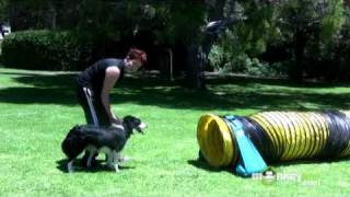 Dog Agility - Training Your Dog To Walk Through Tunnels