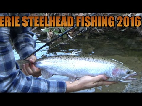 Erie Steelhead Fishing Elk Creek Pennsylvania 2016