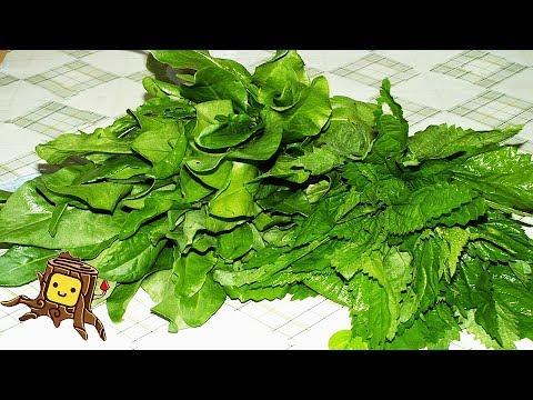 Щавель кислый – полезные свойства, выращивание и уход за