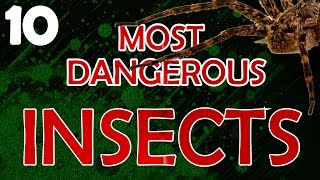 10 Most Dangerous Insects You Don't Want to Meet!