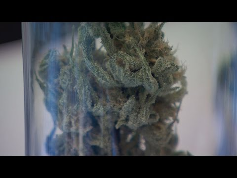 Ballot measure seeks to legalize marijuana in Nevada