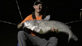 Midnight Madness!!! Multiple Trophy Blue Catfish and Striped Bass Caught while Drifting at Night