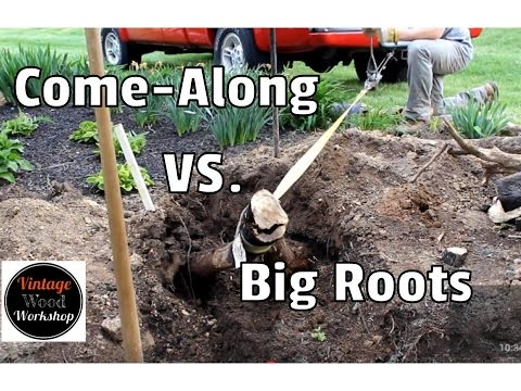 Stump and Root Removal with Fire and a Come-Along