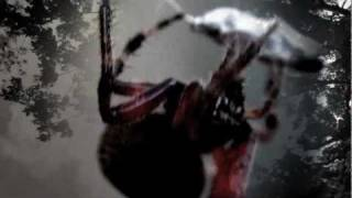 Division - Spider [DnB]