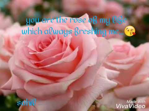 Dedicate this song the rose of your life on this rose day