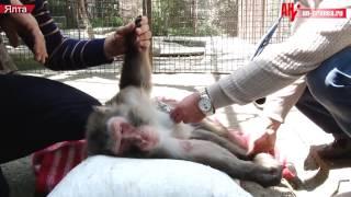 """Как усыпляли животных в ялтинском зоопарке """"Сказка"""""""