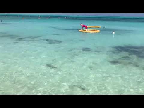 Shark at Grace Bay beach - Turks and Caicos