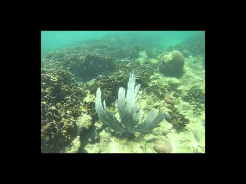 Pitzer College Tropical Marine Ecology: 2013