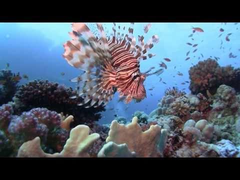 Marsa Alam Abu Dabbab Reef South Doovi