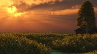 Звонкое вечернее пение птиц. Прохлада вечернего леса. Vibrant evening singing of birds.
