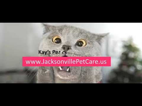 Jacksonville Pet Care | Kays Pet Services