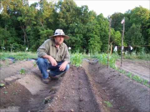 Raised Beds And Staggered Plantings Vegetable Gardening