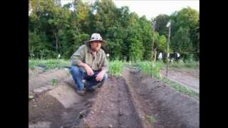 Raised Beds And Staggered Plantings - Vegetable Gardening
