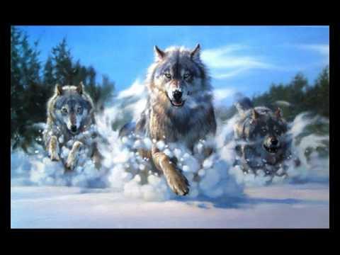 Три волк