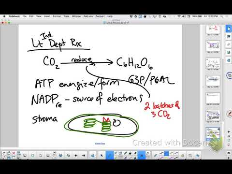 Ap Bio Essay Review Pt   Photosynthesis  Youtube Ap Bio Essay Review Pt   Photosynthesis