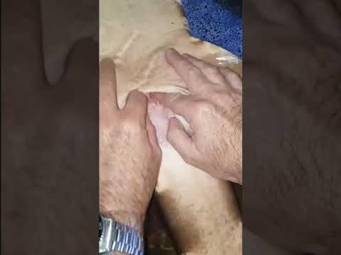 semen collection from boar ( pig ) جمع السائل المنوي من الخنزيرKaynak: YouTube · Süre: 1 dakika53 saniye