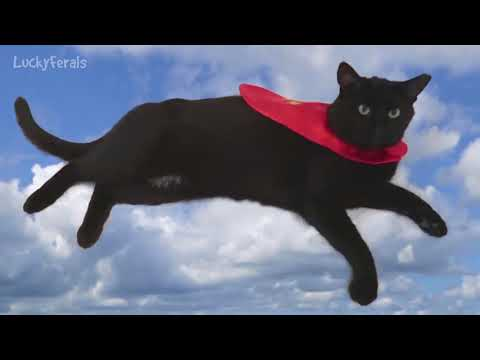 It's A Bird! It's A Plane! It's SUPER BOO! Super Hero Black Cat Flying In His Cape.